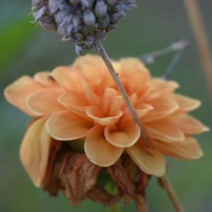 Blomster motiv