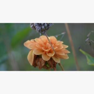 Blomster motiv liggende